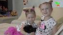Настя и Алиса говорят про кота Феликса