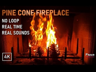 Pine Cone Fireplace ♡ Relaxing fireplace with Pine Cone burning fire ♡ No Loop ♡ Real Time