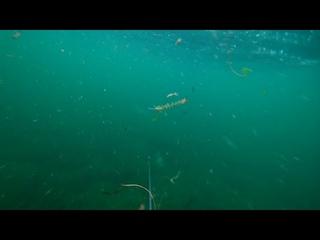 Подводная охота. озеро Увильды.