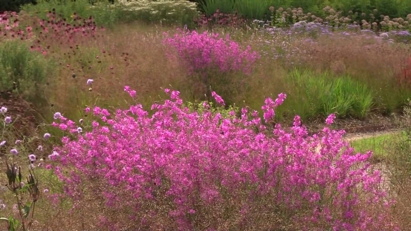 Oudolf Field perennial meadow Bruton Somerset Aug 2015