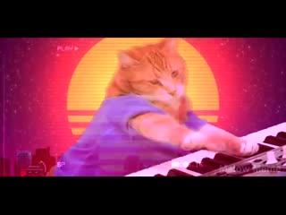 Кавер The Weeknd - Blinding Lights от кошки