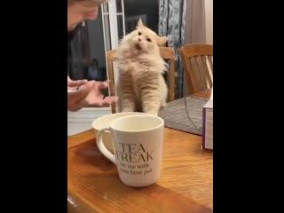 Котик пробует мороженое