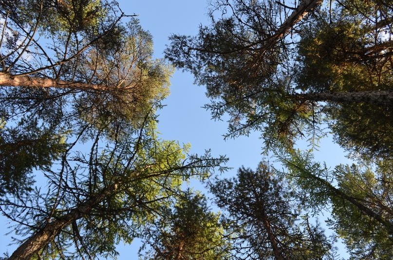 Как сохранить свой лес?, изображение №4