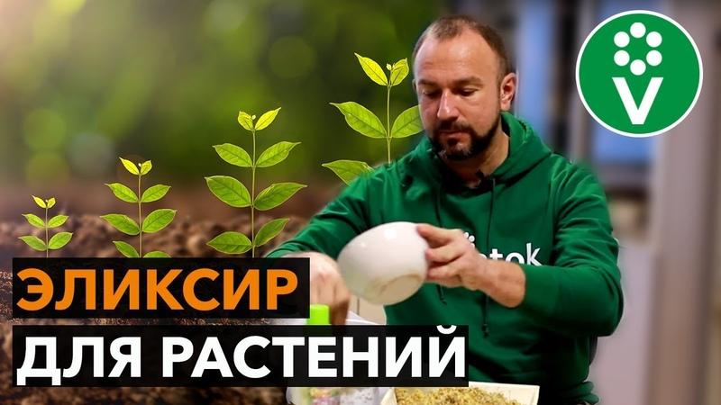 Стимулятор роста растений своими руками Быстрый рост гарантирован