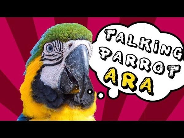 Говорящий попугай Ара Рома говорит Мяу, Гав-Гав, Привет, Как дела, Папа и другие слова Подборка