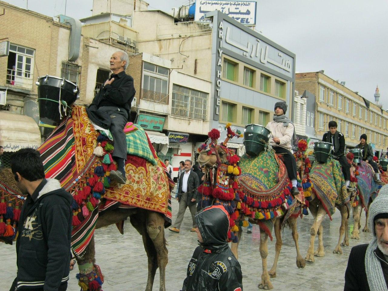 в Куме верблюжьи демонстрации