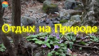 Пение Соловья Лесной Ручей Усыпляющие Звуки Природы / Nightingale Singing  / Relaxing Nature Video