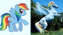 Персонажи Май Литл Пони в Реальной Жизни! My Little Pony!