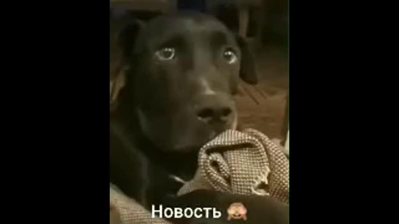 2 декабря Соседская собака беременна