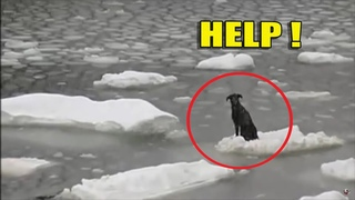 Невероятные случаи везения и спасение животных попавших в трудную ситуацию