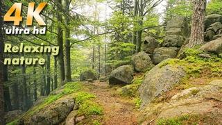 4K Virtual Walk at National Park Karkonosze. relaxing sounds Nature Sounds. Relaxing  song