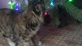 Успела ли я закончить ремонт? Новогоднее настроение. Коты встречают Новый год