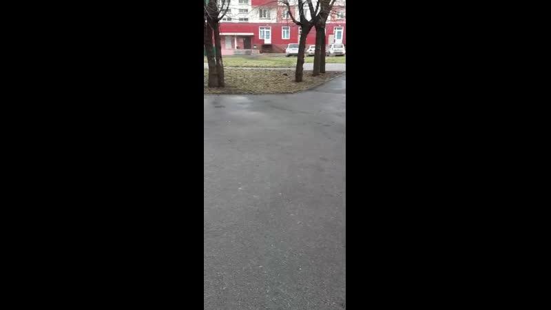 Собаки живут стаями во дворах Новокузнецка Мы живем не в поле не в лесу а в ГОРОДЕ Это ненормально