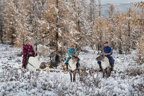 Серия фотографий о жизни семьи оленеводов, Северная Монголия.