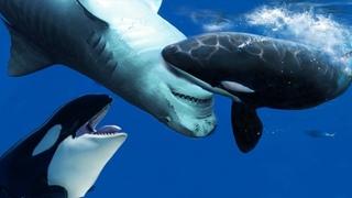 Уникальные Кадры, Когда Морские Животные Не На Того Напали