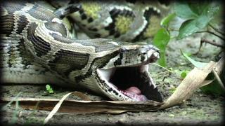 Python Attack Compilation 01