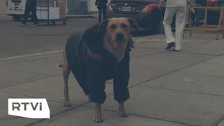 Самый лучший друг: пес Фиру несколько дней ждет у больницы хозяина