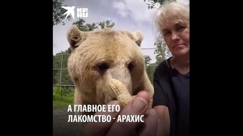 Мой друг медведь