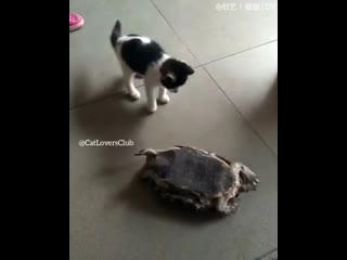 Хороший котик