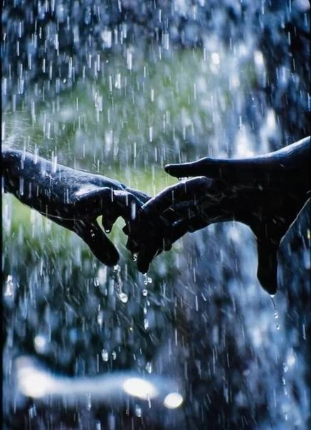 А ты такой холодный, серый дождь осенний... И по души ступеням стремишься в самый низ....Туда где мое сердце, с разбитыми коленями,Свой танец исполняет с выходом на бис.....Где нежность-дура