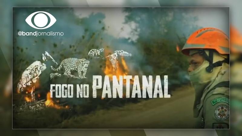 Fogo no Pantanal animais sofrem com as queimadas históricas no bioma