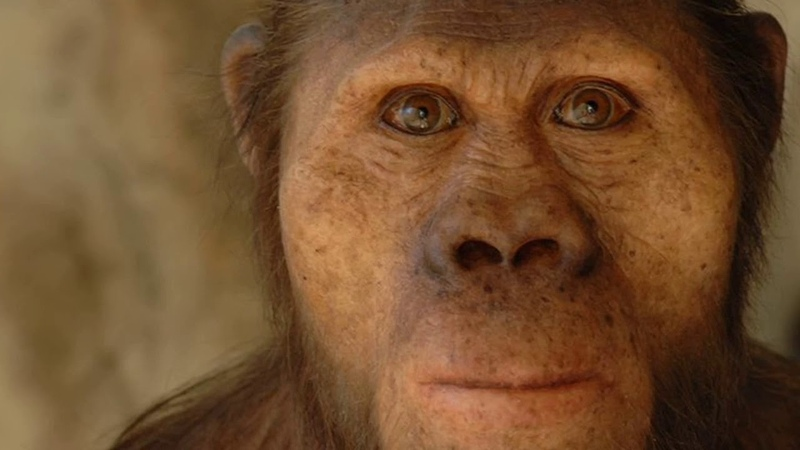 Lucy, Femeia Care a Trait Acum 3 Milioane de Ani o Descoperire Monumentala