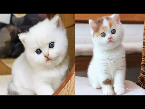 Super cute kittens Episode 13 Funny Animals Cute Is Not Enough