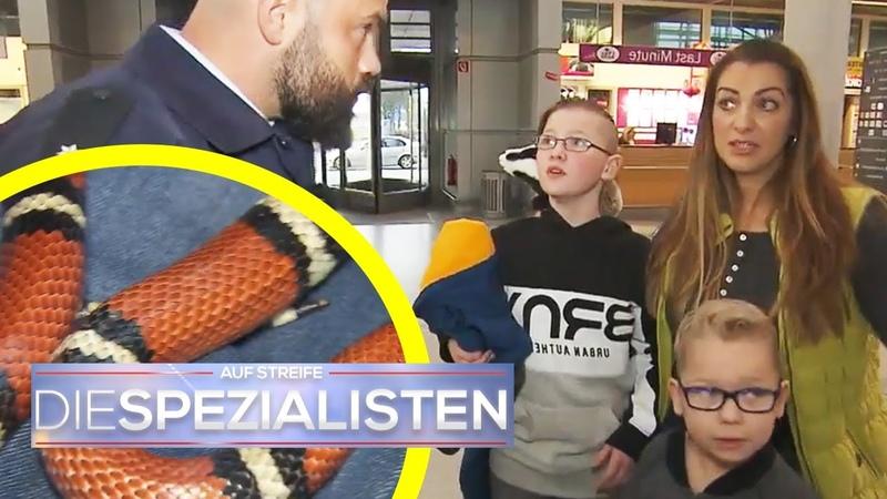 Giftige Schlange im Gepäck Panik am Flughafen Die Spezialisten SAT 1