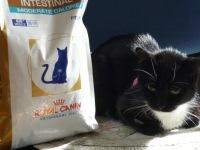 Огуречный цепень у кошек опасен для человека - Всё о