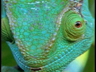 BBC Ребятам о зверятах Серия 14 Зеленая игуана Игби