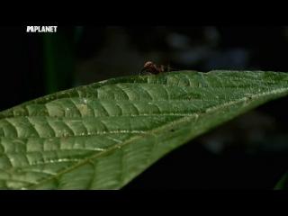 Войны жуков гигантов 2 1 серия Monster bug wars 2 2012