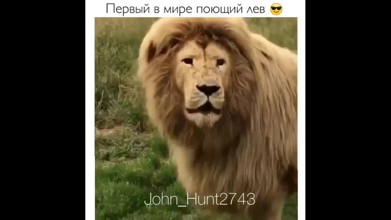 Картинка поющий лев у нас один