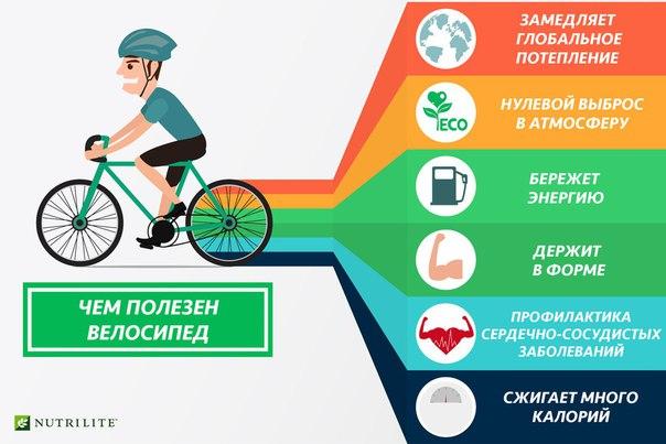Польза велосипеда от простатита антибиотик для лечения простатита у собак