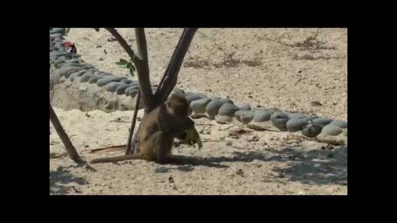 Остров обезьян экскурсии в Нячанге северные острова