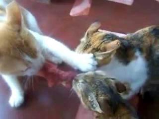 Какой котэ победит?