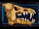 Доисторические хищники — Адский кабан (Документальные фильмы Nat Geo Wild HD)