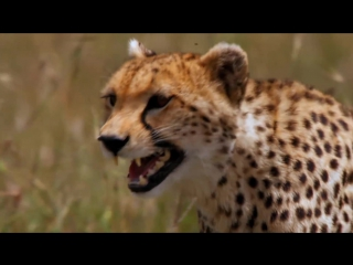 African Cats - Official Trailer [HD] ...
