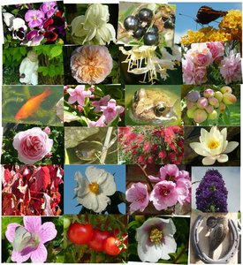 Medicinal and Aromatic Plants - vol