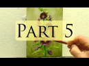How to Paint Hollyhocks - Alla Prima Oil Painting Video - Bill Inman Part 5 of 9