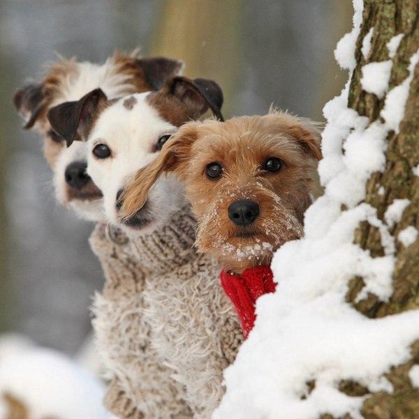 Картинки зимние с животными с добрым