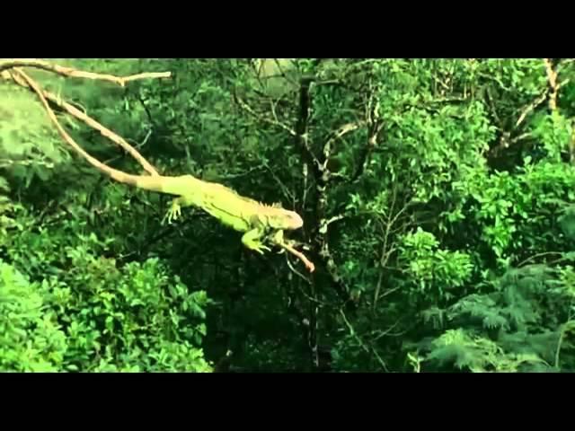 Детям о животных Зеленая Игуана Познавательный фильм