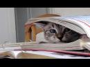 Кошкин Дом ✦ Приколы Про Кошек ✦ Funny cats ✦ Cats House ✦ LUCKY