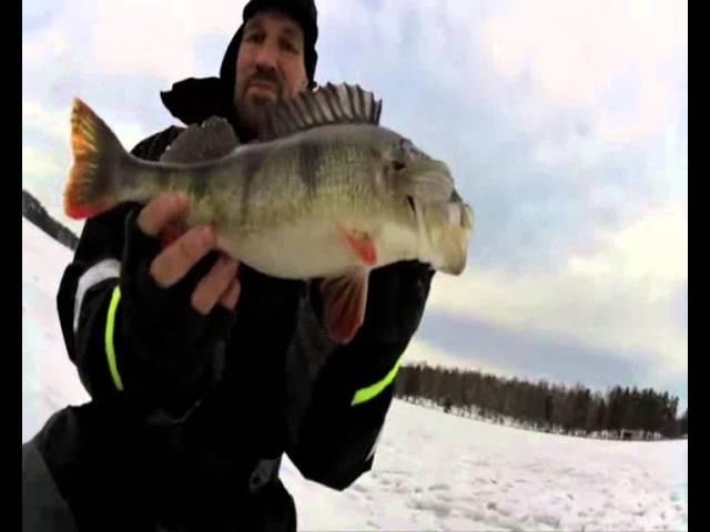 Ловля огромных окуней зимой Трудно поверить в происходящее Winter fishing Perch