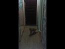 кот срет как суслик