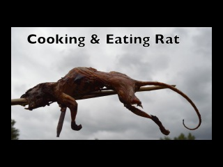 Cooking and Eating Rats. Paiute Deadfall Trap in Action Part 3. Bushcraft Survival Skills