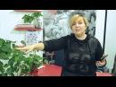 201 клиент с 1 Ноября по 15 Декабря в салон красоты - Biza24 технология привлечения кли