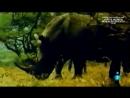 Grandes documentales El vuelo del Rinoceronte