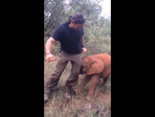 Big game hunter trampled to death by elephant in africa
