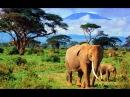 Мир дикой природы Тайланда - часть 2. Документальный фильм 06.02.2017