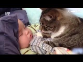 Котики  лучшие няни